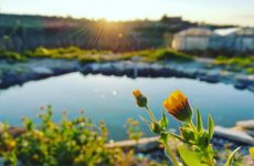 The Circle, a Roma una farm dove si coltivano verdure con scarti prodotti da pesce