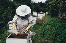 Apicoltura, dalla Regione Lazio un bando da 136mila euro