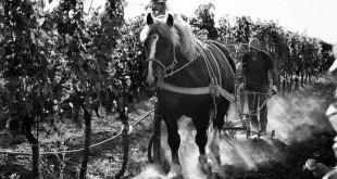 Azienda agricola Marco Carpineti, la forza di produrre vino biologico