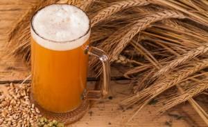 Glifosato, ecco quali sono le birre vendute in Italia che lo contengono