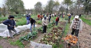 A Frascati nascono gli orti sociali: tutte le info