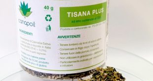 Tisana alla cannabis, tutti i benefici. Solo da Subsmoke a Palestrina