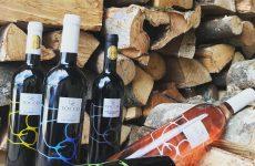 Tocco vini, i valori e le tradizioni di una grande famiglia